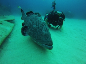 Tyler swimming with the grouper